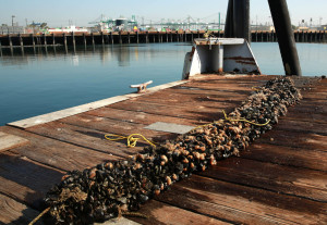 Mussels_980