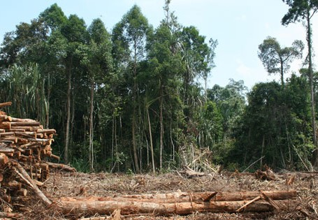 Indonesia-Rainforest-Deforestation-CC-Rainforest-Action-Network-2009